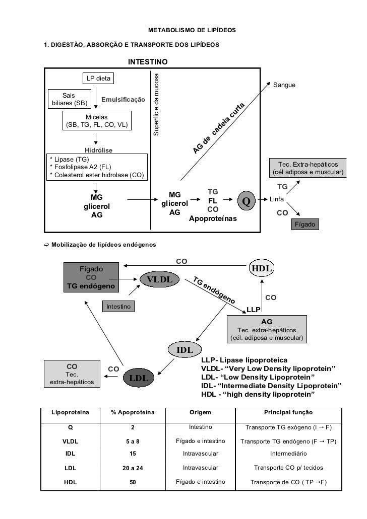 METABOLISMO DE LIPÍDEOS1. DIGESTÃO, ABSORÇÃO E TRANSPORTE DOS LIPÍDEOS                              INTESTINO             ...