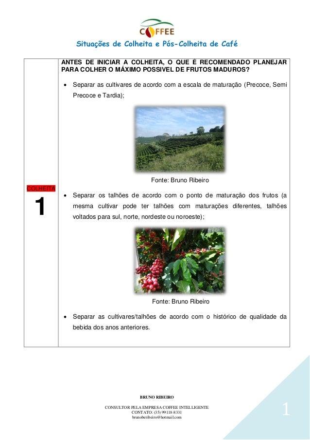 Situações de Colheita e Pós-Colheita de Café BRUNO RIBEIRO CONSULTOR PELA EMPRESA COFFEE INTELLIGENTE CONTATO: (35) 99118-...
