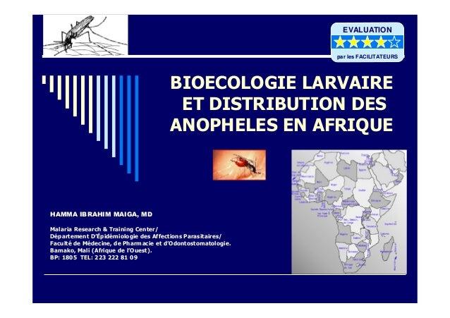 BIOECOLOGIE LARVAIREET DISTRIBUTION DESANOPHELES EN AFRIQUEHAMMA IBRAHIM MAIGA, MDMalaria Research & Training Center/Dépar...