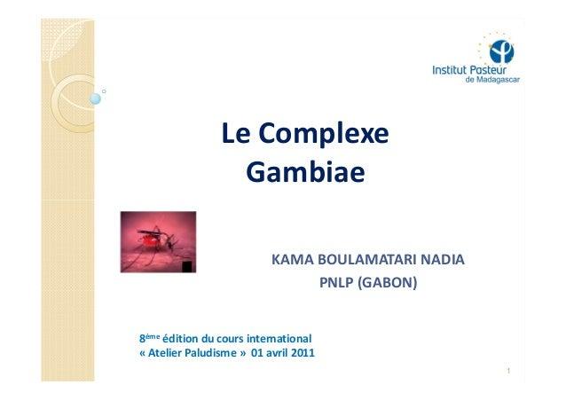 Le Complexe                  Gambiae                          KAMA BOULAMATARI NADIA                               PNLP (G...
