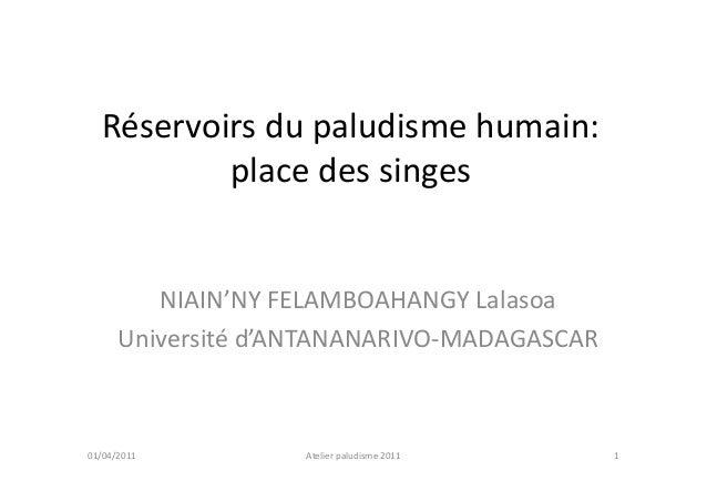 Réservoirs du paludisme humain:          place des singes         NIAIN'NY FELAMBOAHANGY Lalasoa      Université d'ANTANAN...
