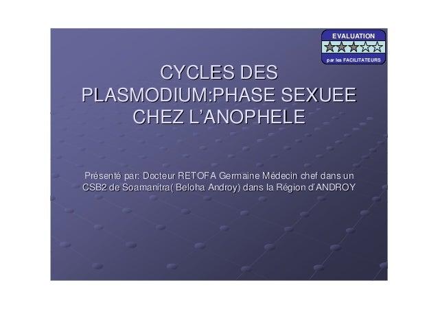 CYCLES DESCYCLES DESPLASMODIUM:PHASE SEXUEEPLASMODIUM:PHASE SEXUEECHEZ LCHEZ L''ANOPHELEANOPHELEPrPréésentsentéé par: Doct...