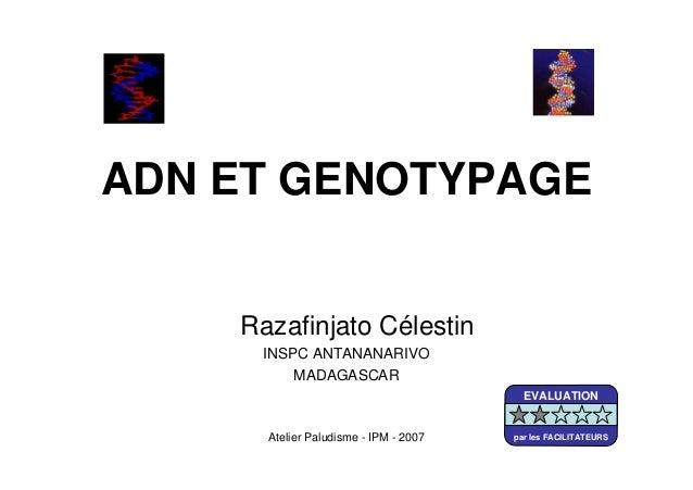 Atelier Paludisme - IPM - 2007ADN ET GENOTYPAGERazafinjato CélestinINSPC ANTANANARIVOMADAGASCAREVALUATIONpar les FACILITAT...