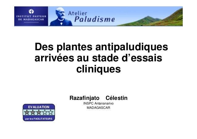 Des plantes antipaludiquesarrivées au stade d'essaiscliniquesRazafinjato CélestinINSPC AntananarivoMADAGASCAREVALUATIONpar...