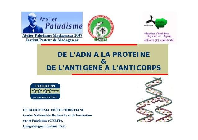 DE LDE L''ADN A LA PROTEINEADN A LA PROTEINE&&DE LDE L''ANTIGENE A LANTIGENE A L''ANTICORPSANTICORPSDr. BOUGOUMA EDITH CHR...