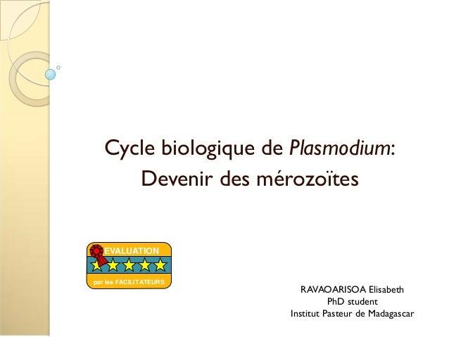 Cycle biologique de Plasmodium:Devenir des mérozoïtesRAVAOARISOA ElisabethPhD studentInstitut Pasteur de MadagascarEVALUAT...
