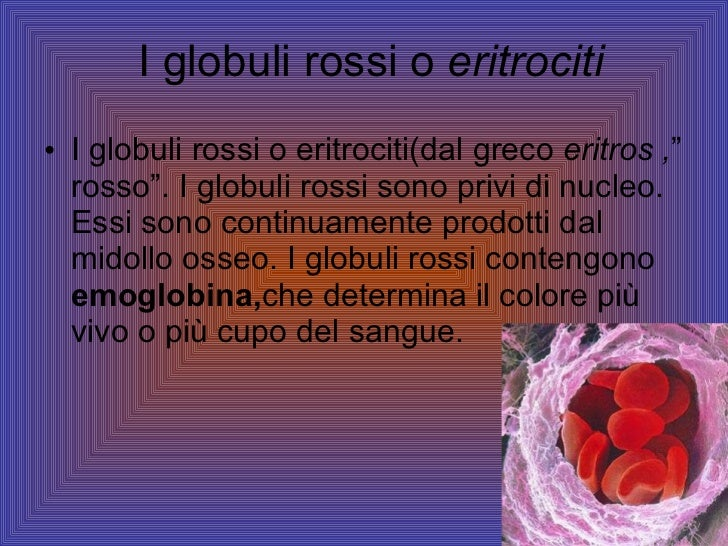 "I globuli rossi o  eritrociti <ul><li>I globuli rossi o eritrociti(dal greco  eritros , "" rosso"". I globuli rossi sono pri..."