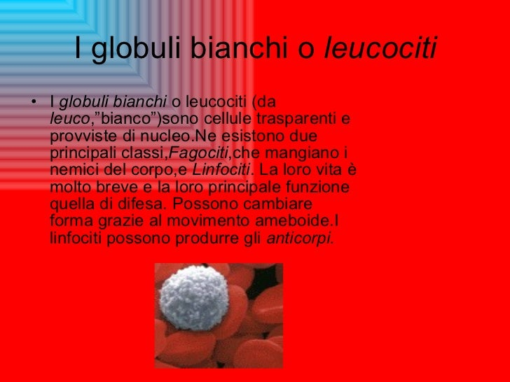 "I globuli bianchi o  leucociti <ul><li>I  globuli bianchi  o leucociti (da  leuco ,""bianco"")sono cellule trasparenti e pro..."