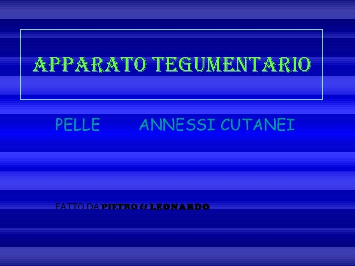 Apparato tegumentario PELLE    ANNESSI CUTANEI FATTO DA  PIETRO &  LEONARDO