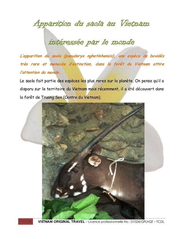 Apparition du saola au Vietnam intéressée par le monde L'apparition du saola (pseudoryx nghetinhensis), une espèce de bovi...