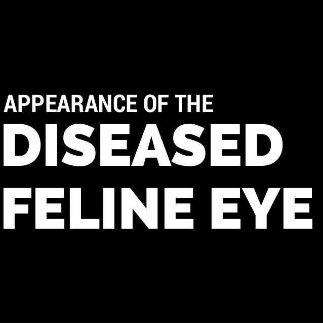 DISEASED FELINE EYE APPEARANCE OF THE