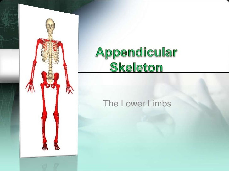 AppendicularSkeleton<br />The Lower Limbs<br />