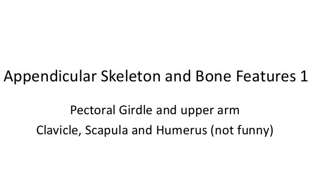 Appendicular Skeleton and Bone Features 1 Pectoral Girdle and upper arm Clavicle, Scapula and Humerus (not funny)
