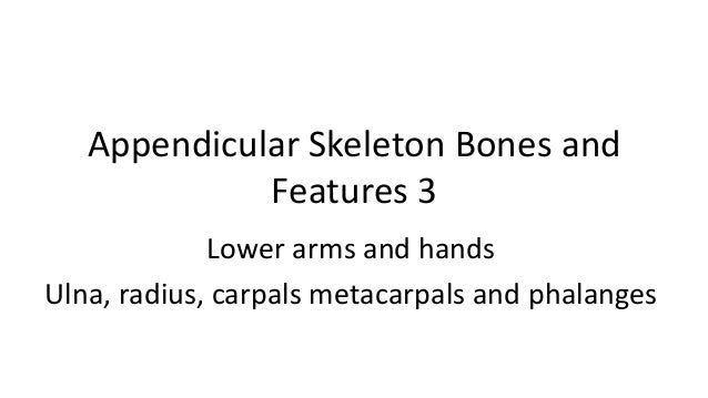 Appendicular Skeleton Bones and Features 3 Lower arms and hands Ulna, radius, carpals metacarpals and phalanges