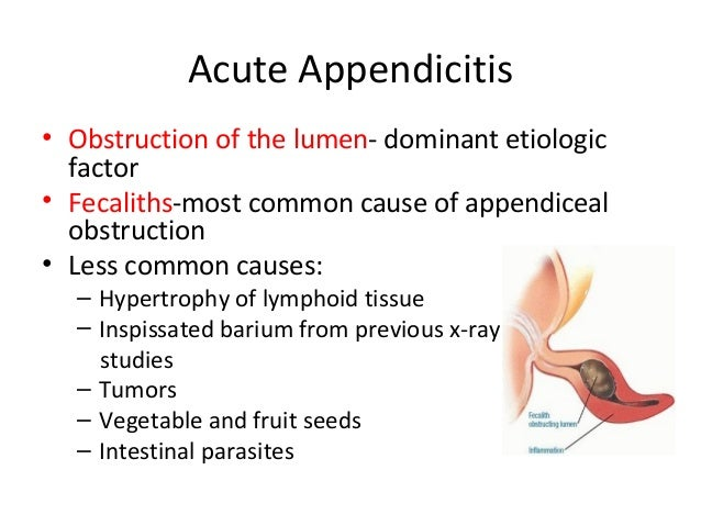 appendix, Human Body