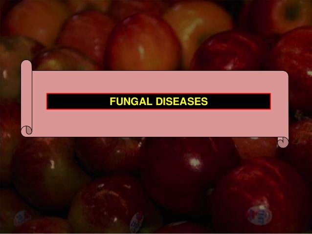 Apple Diseases By Sajad