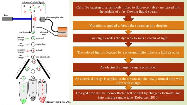 Fluorescence-Activated Cell Sorting