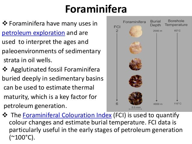 application of biomarkers in petroleum exploration