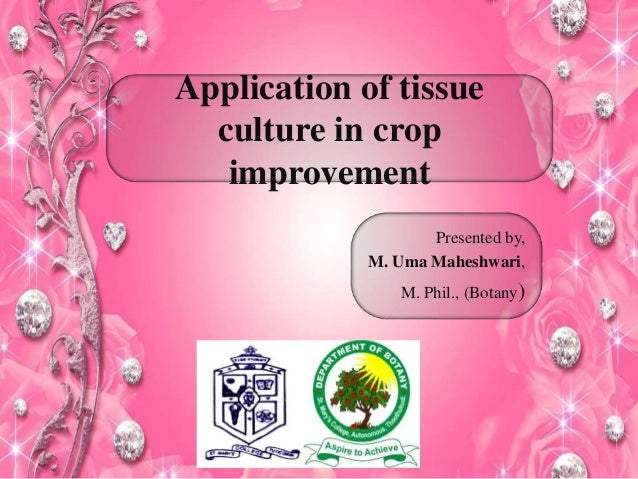 Application of tissue culture in crop improvement Presented by, M. Uma Maheshwari, M. Phil., (Botany)