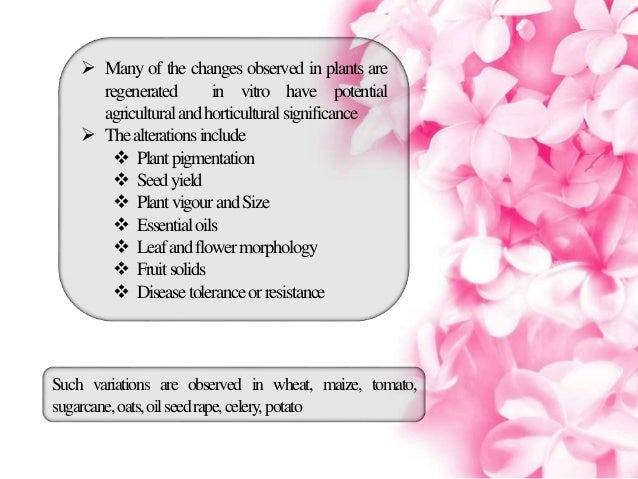 improvement of tissue culture in alstroemeria The influence of cytokinins and auxins on alstroemeria in tissue culture [1985] gabryszewska, e (research inst of pomology and floriculture, skierniewice (poland)) hempel, m.