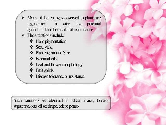 improvement of tissue culture in alstroemeria