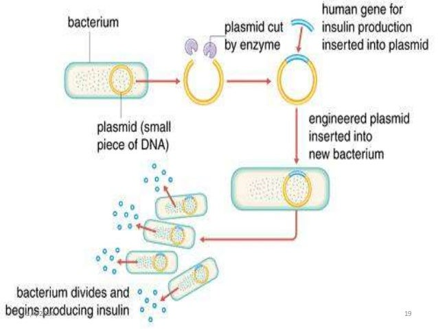 what are important applications of microbiology