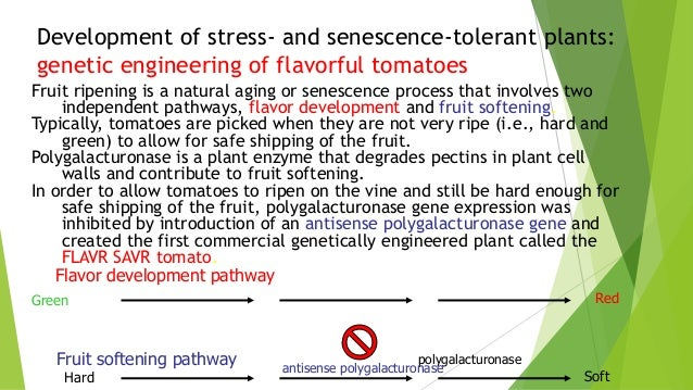 Short essay on genetic engineering