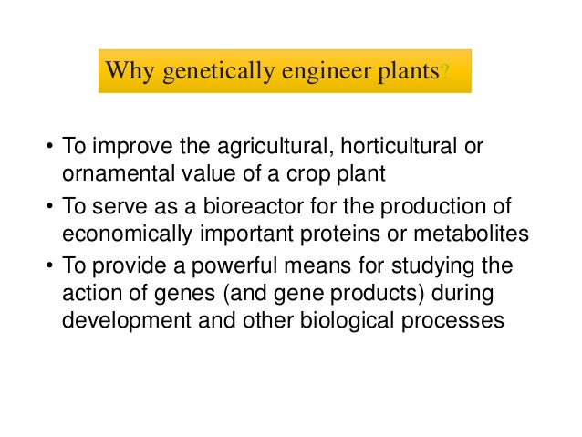 the applications and techniques involve in genetic engineering The new gene is inserted into some of the cells using various techniques some of the more common methods include the gene the process of plant genetic engineering.