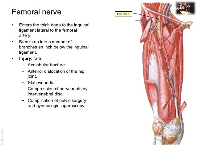 applied anatomy femoral nerve injury, Muscles
