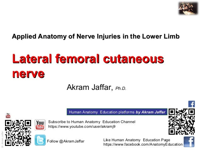 applied anatomy lateral femoral cutaneous nerve injury, Muscles
