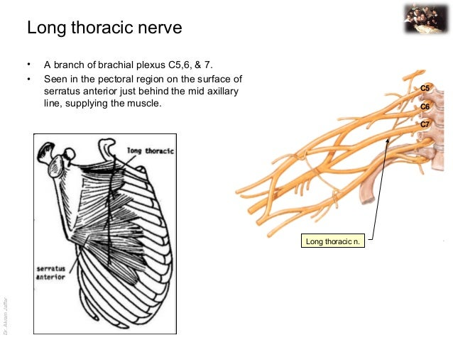 Applied anatomy long thoracic nerve injury