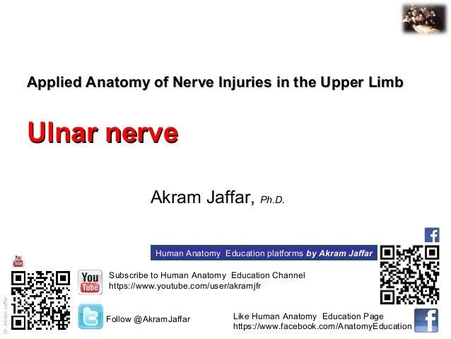 Dr.AkramJaffar Applied Anatomy of Nerve Injuries in the Upper LimbApplied Anatomy of Nerve Injuries in the Upper Limb Ulna...