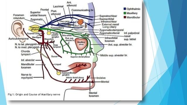 applied anatomy of maxillary nerve
