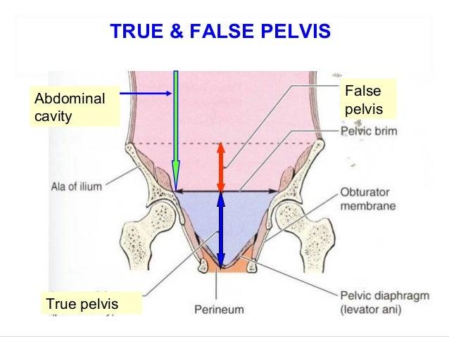 Pelvis Diagram Pelvic Brim Block And Schematic Diagrams