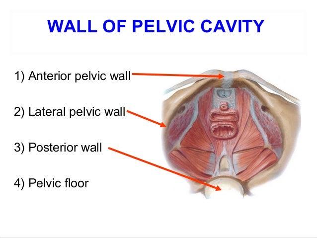 Applied Anatomy Of Pelvis And Fetal Skull