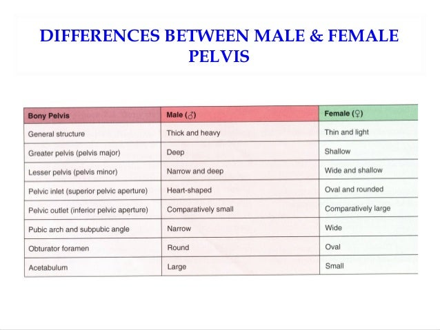 Differences Between The Male And Female Pelvis