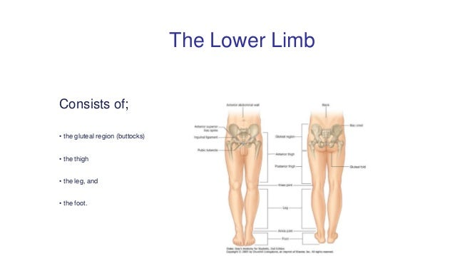 Applied and clinical anatomy of lower limb