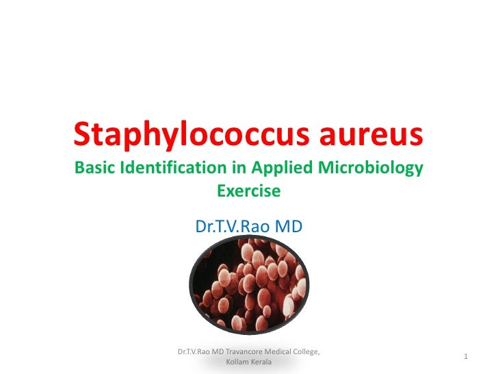 Staphylococcus aureusBasic Identification in Applied Microbiology                   Exercise                 Dr.T.V.Rao MD...