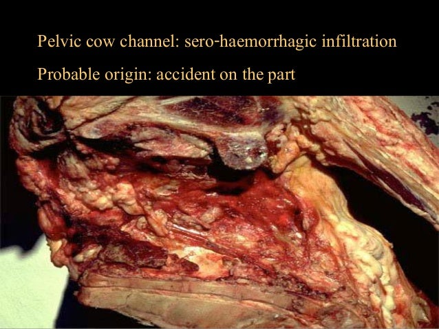 Applied pathological anatomy in inspection of meat