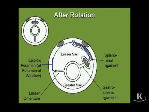 Applied radiological anatomy