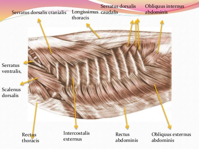 Small Dogs Anatomy