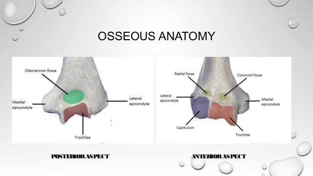 Surgical Approaches to distal humerus fractures - DR.S.SENTHIL SAIL…