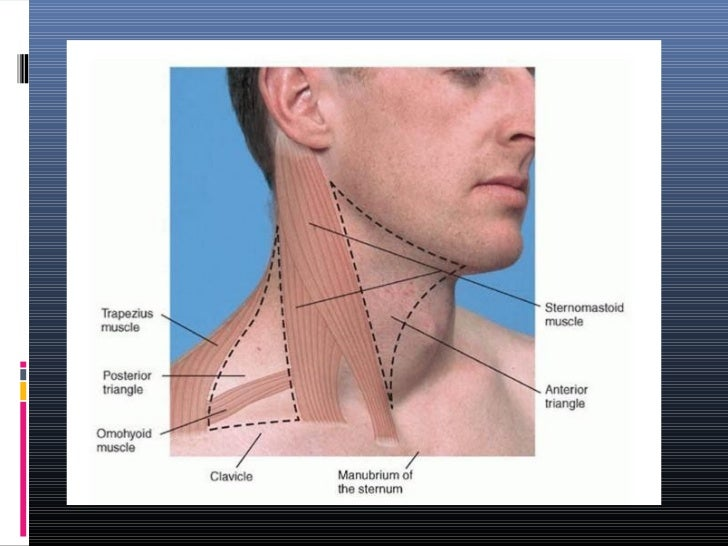 Swollen Supraclavicular Lymph Nodes Left Side