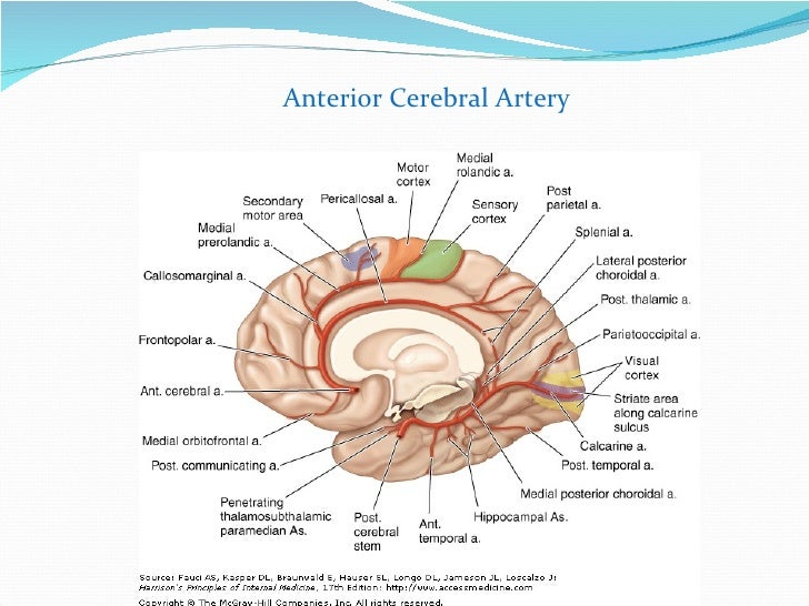 Functional Cerebral SPECT and