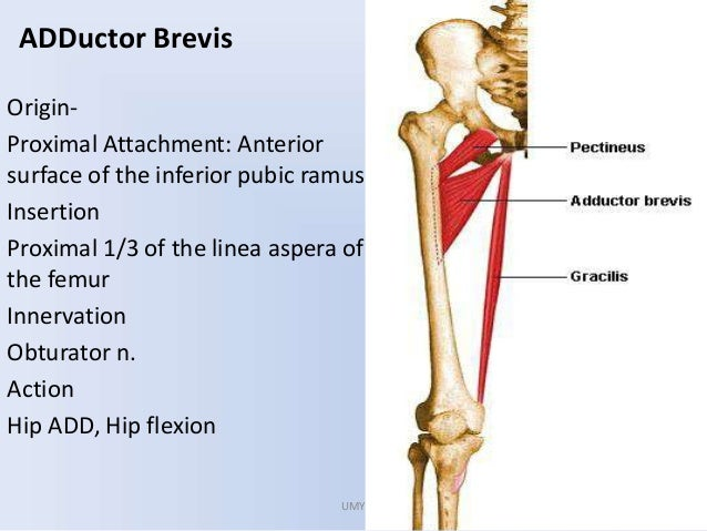 Approach to hip joint