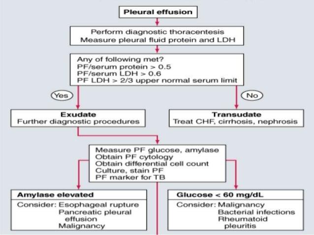 approach to pleural effusion, Skeleton