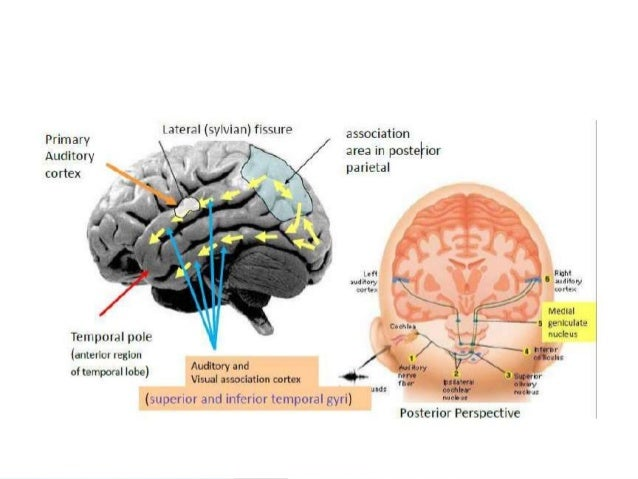 Approach To Temporal Lobe Anatomyfunctionepilepsy Mri Finding