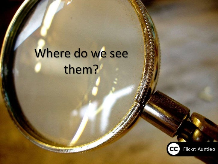 Where do we see    them?                  Flickr: Auntieo