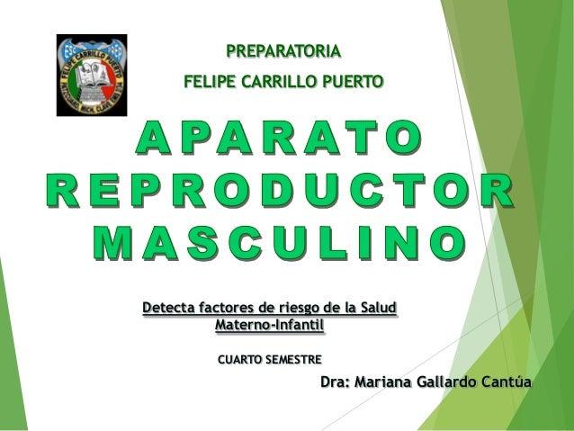 PREPARATORIA FELIPE CARRILLO PUERTO  Detecta factores de riesgo de la Salud Materno-Infantil CUARTO SEMESTRE  Dra: Mariana...