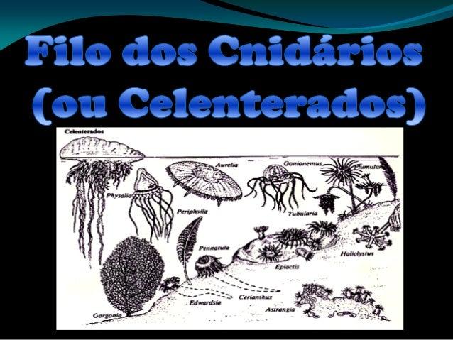 Introdução São animais geralmente de corpo mole, gelatinoso que vivem em ambientes aquáticos e cujos principais representa...